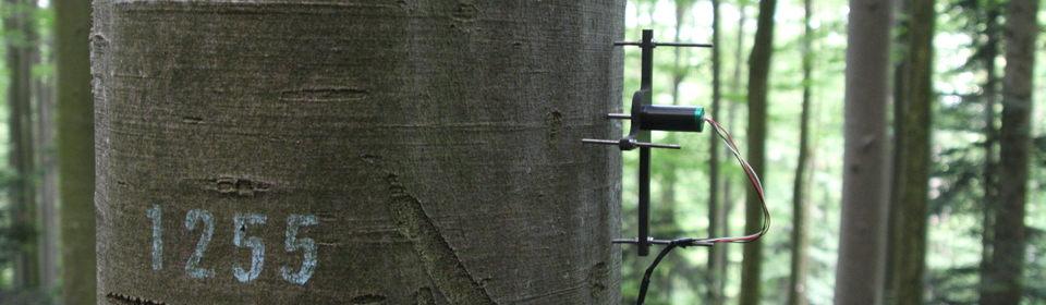 Dendrometers to measure the rhythm of trees ...