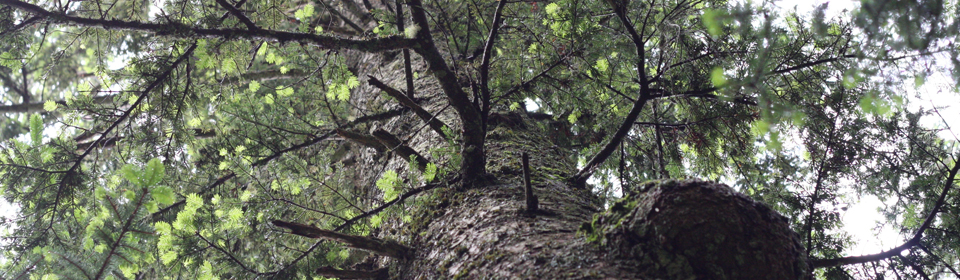 Investigate the drivers of tree growth ...